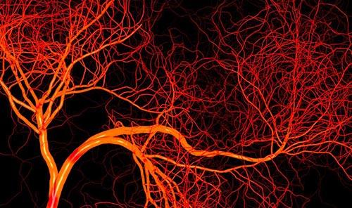 【健康飲食】「幽靈血管」如何改善?