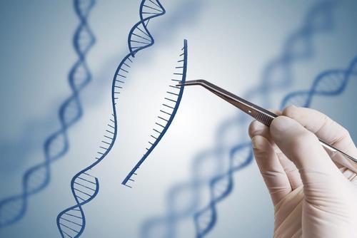 什麼是疾病易感基因?