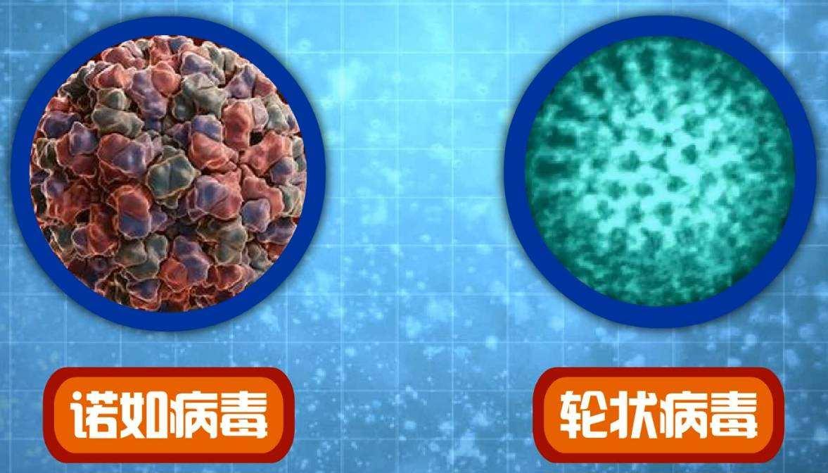 如何治療諾如病毒和輪狀病毒?