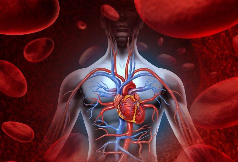 遠離膽固醇大作戰 「高膽固醇」對身體的危害