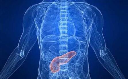 胰腺是什麼?它大概是在哪個位置?