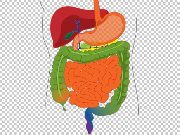 如何預防大腸癌?